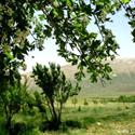 مزرعه کتی گربین سمیرم استان اصفهان