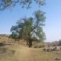 دره تنگ دم تنگ استهبان استان فارس