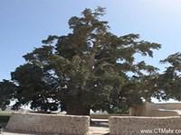 سرو زربین سنگان استان سیستان بلوچستان